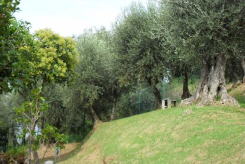 Villa con terreno in zona panoramica a Massaciuccoli (10)