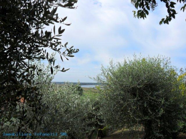 Villa con terreno in zona panoramica a Massaciuccoli (12)