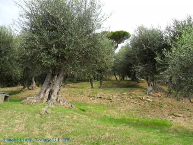 Villa con terreno in zona panoramica a Massaciuccoli (13)